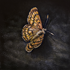 Common Copper Butterfly Art Print