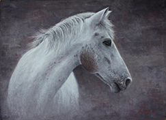 Horse painting in pastel by pet portrait artist Karen Neal