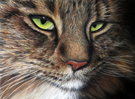 Maine Coon cat pet portrait painting by New Zealand artist Karen Neal