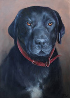 Commissioned oil painting of Sambo, by New Zealand pet portrait artist Karen Neal